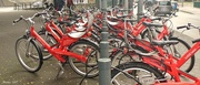 11th Jul 2017 - Lots of Red Bikes