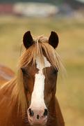 4th Aug 2017 - Horse Face