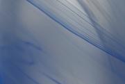 8th Aug 2017 - Thin blue line