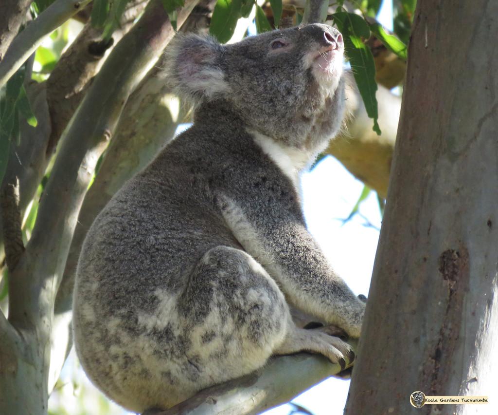 eyes to the sky by koalagardens
