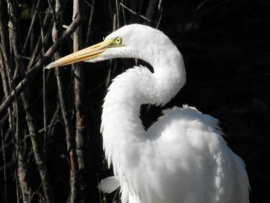 Egret profile by amyk