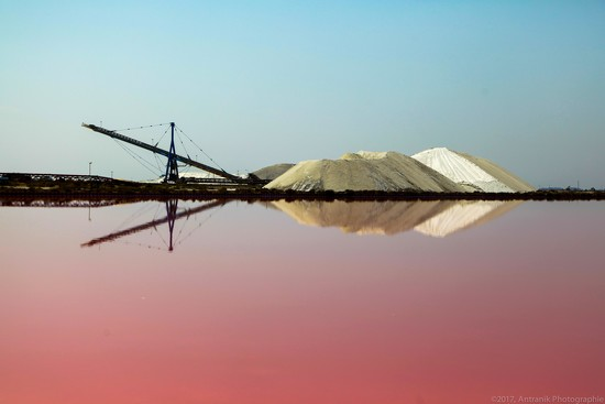 Salt Camel - Camargues, France by zetoune