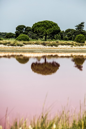 Red Reflection - Camargues, France by zetoune