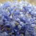 Tiny flowers by amfrumbiddivurd