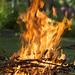 Burning Branches