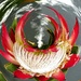 Our national flower, King Protea for Etsooi.