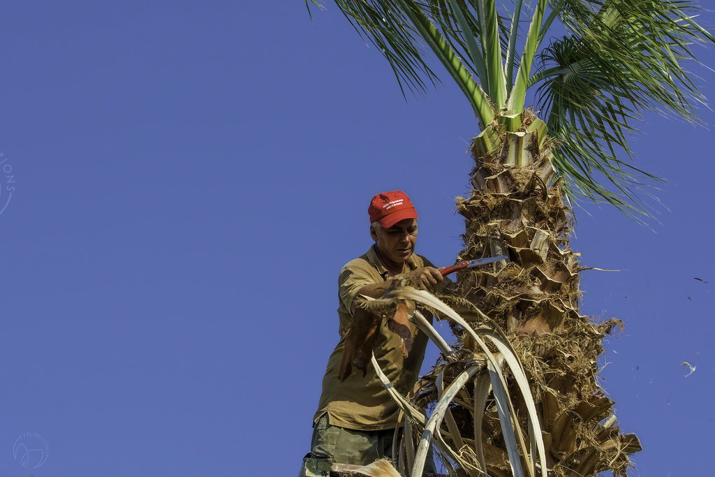 Cleaning the Palm Trees by evalieutionspics