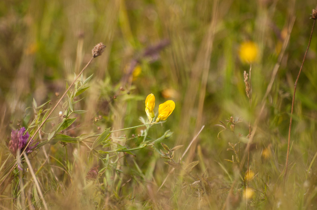 Flowers of the field by fbailey