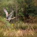 Sandhill Crane on the Move by taffy