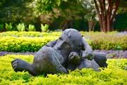 """11th Aug 2017 - The Arboretum """"Lovers"""""""