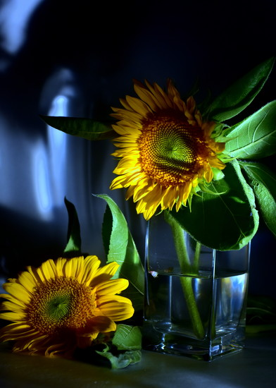 Sun = Flowers = Sunflowers by jayberg