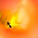 Gladiola Ant by stefneyhart