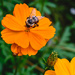Orange Bee by marylandgirl58