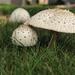 Nighttime Fungi 2 by loweygrace