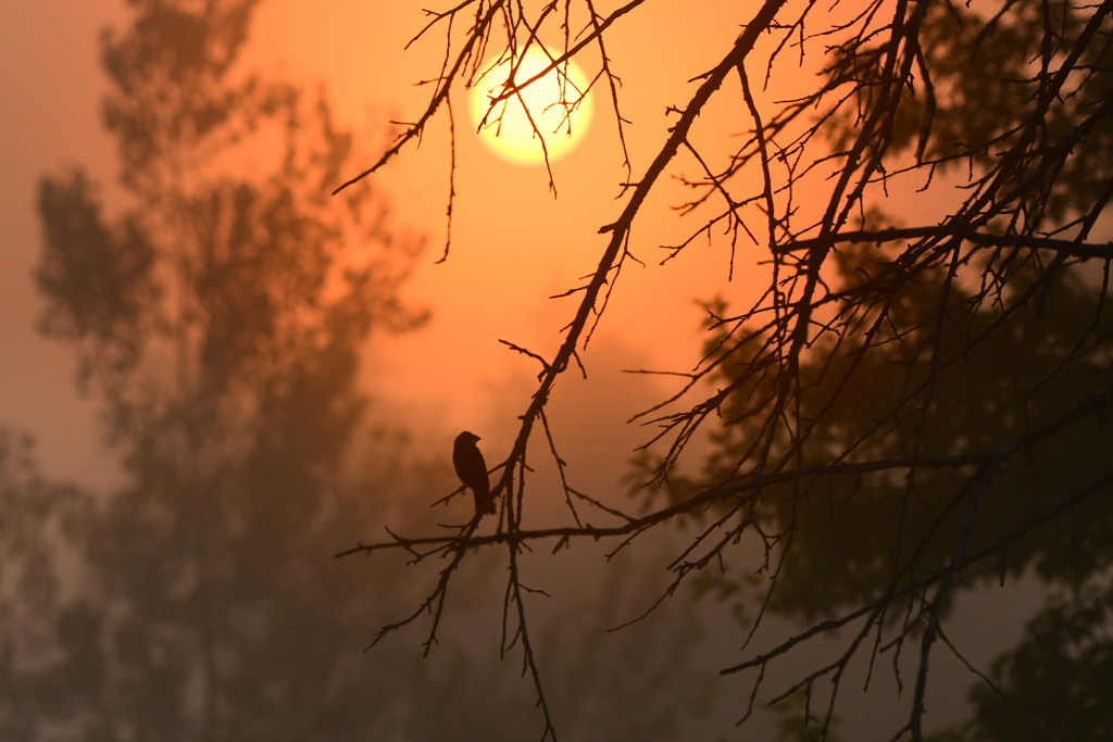 Bird in Foggy Kansas Sunrise by kareenking
