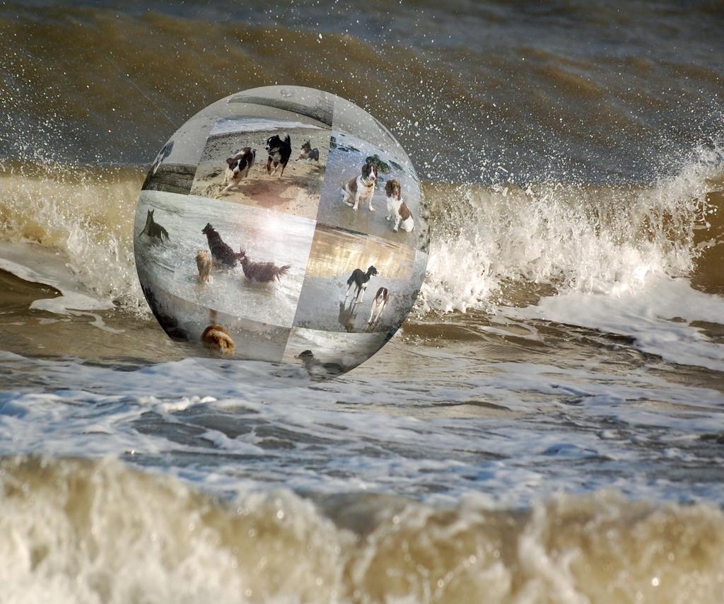 Seadogs by fbailey