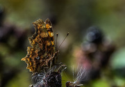 13th Aug 2017 - Just a comma