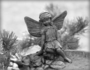 12th Aug 2017 - Garden Fairy.
