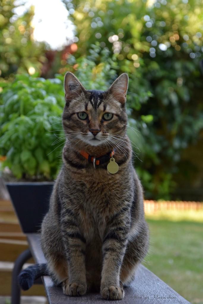 Posing like a good cat!  by parisouailleurs