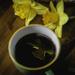 Day 227 Coffee and Daffodiles