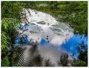 16th Aug 2017 - Ripples And Reflections