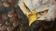 15th Aug 2017 - Painted Eagle