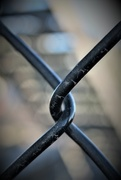 15th Aug 2017 - Chain Link