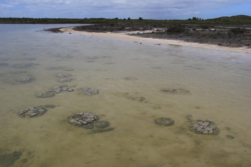 Stromatolites by landownunder
