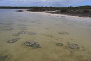 16th Aug 2017 - Stromatolites