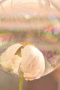 18th Aug 2017 - colour my bubble......