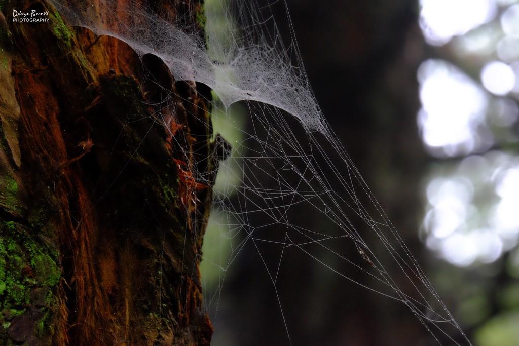 cobweb by dkbarnett