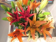 19th Aug 2017 - Asiatic lilies from the farm