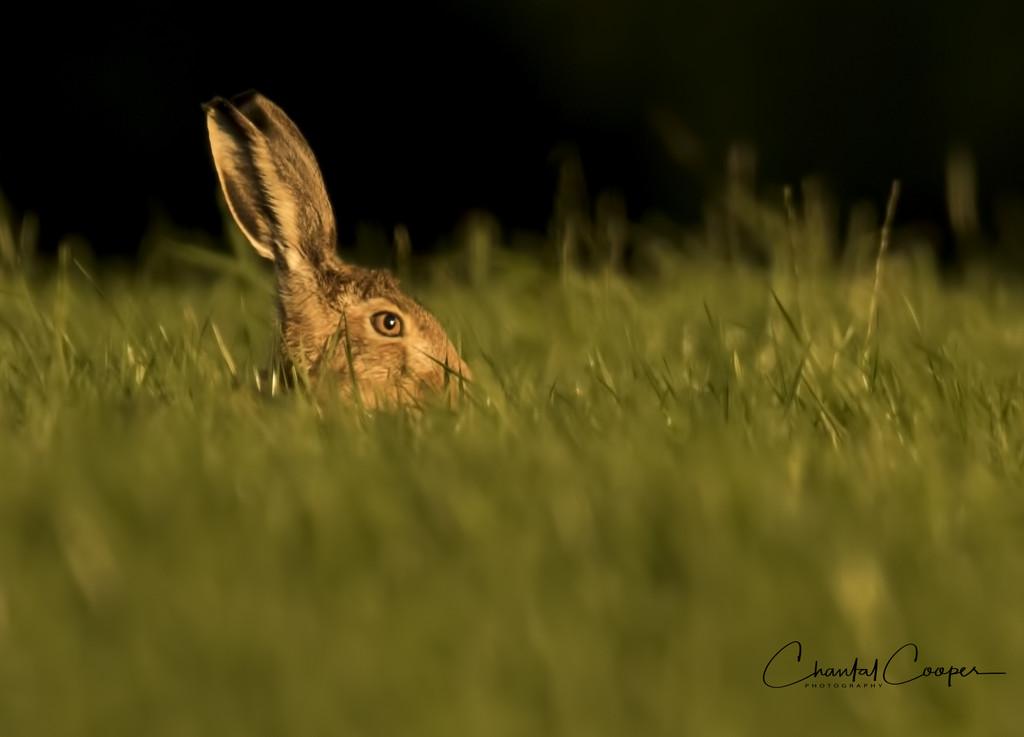 Peek-a-boo......I see you...... by shepherdmanswife