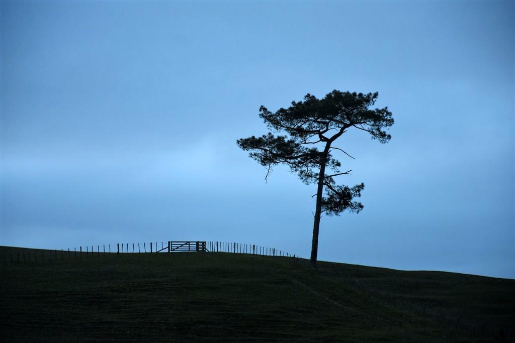 Lone Tree by nickspicsnz