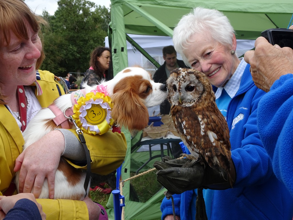 Pooch meets Owl ! by beryl