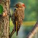 Peck Peck Peck by milaniet