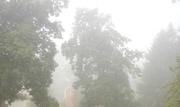 20th Aug 2017 - Foggy morning
