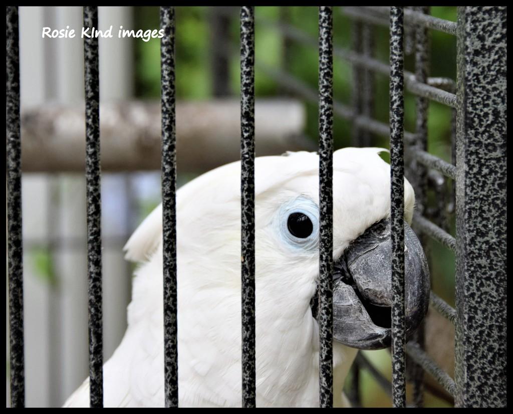 Behind bars by rosiekind