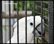 20th Aug 2017 - Behind bars