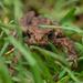 Teeny Tiny Toad