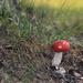 Red Mushroom by loweygrace
