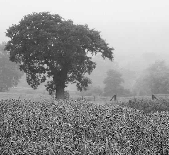 Grey day by flowerfairyann