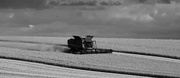 21st Aug 2017 - Wheat Harvest