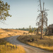 Western Homestead by 365karly1
