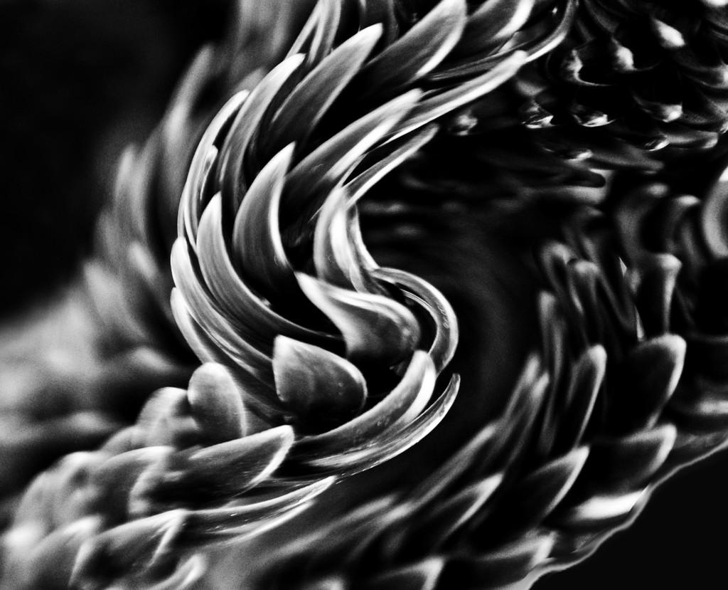 twirl by annied