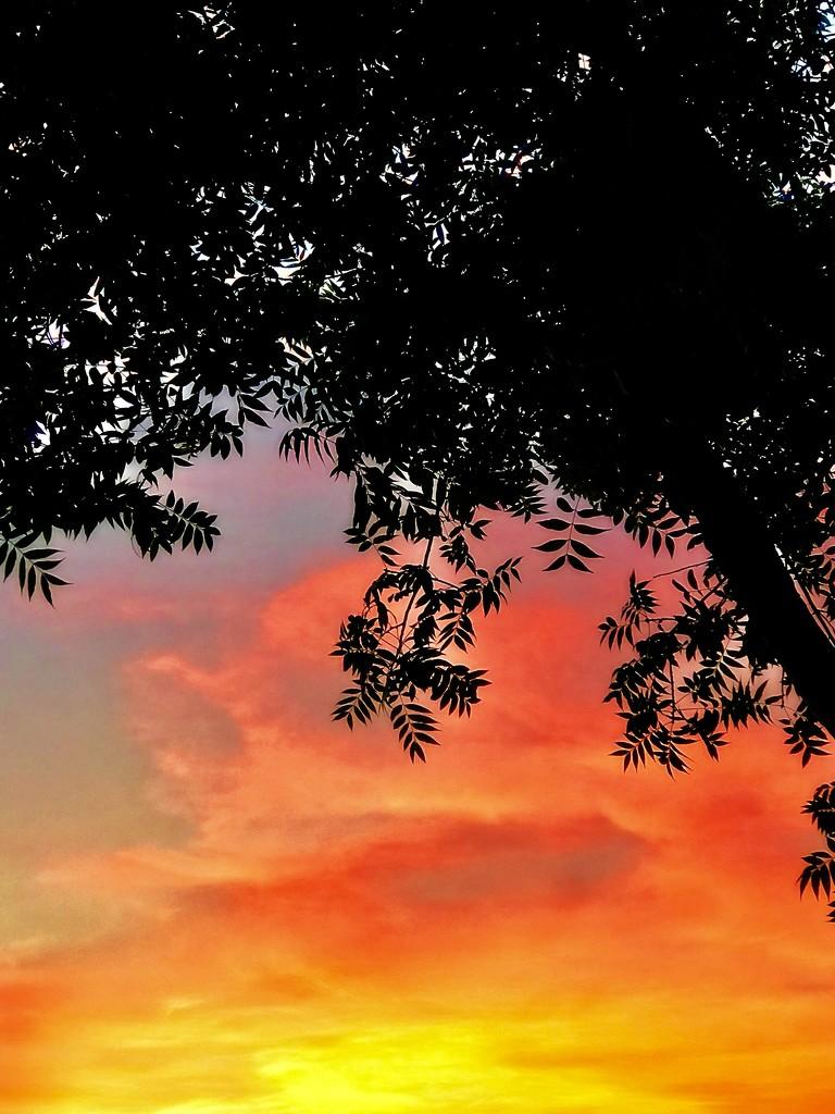 It Lights Up The Sky by gardenfolk