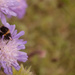 Bumbling along by fbailey
