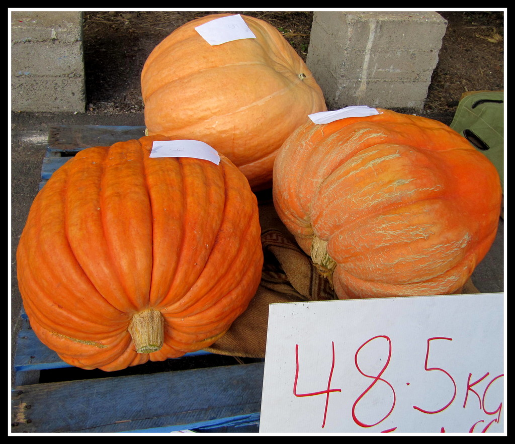 Massive Pumpkins    Wonder what they are like inside by 777margo