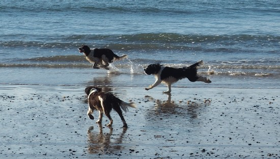 Running wild , Flynn Mintee and Emcee at Te Ngaire Bay this afternoon by Dawn