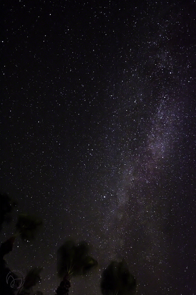Star Gazing by evalieutionspics